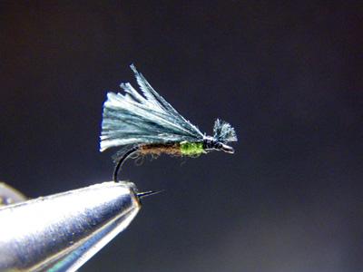 ヒラタコエグリトビケラ