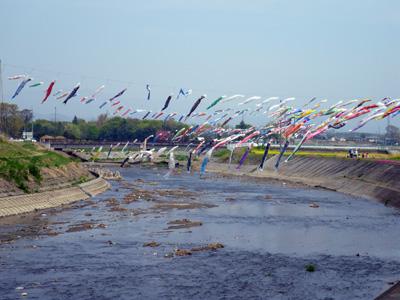 粕川の鯉幟