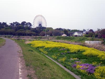 華蔵寺公園の観覧車と粕川