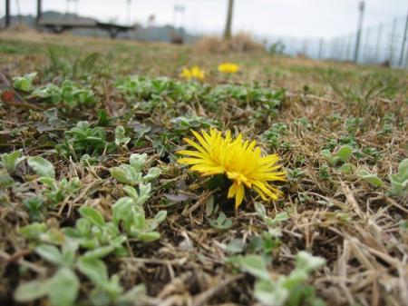 小さな野の花 牛津 030 - コピー