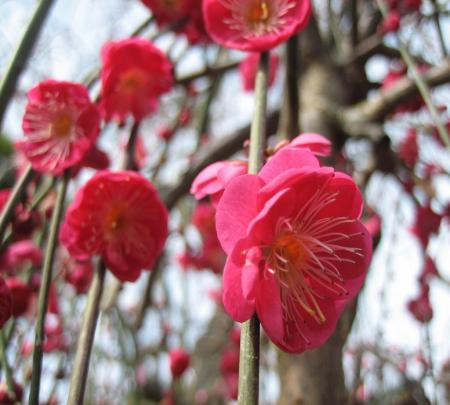 久留米植木祭り 032 - コピー