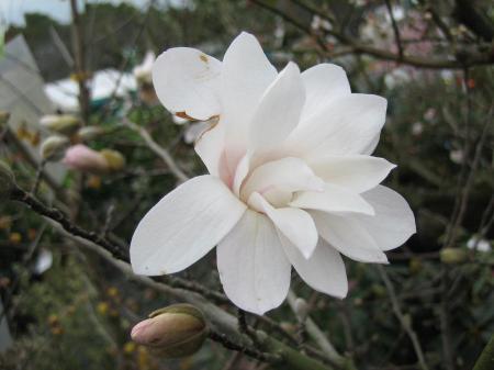 久留米植木祭り 099 - コピー