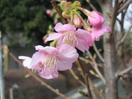 久留米植木祭り 152 - コピー