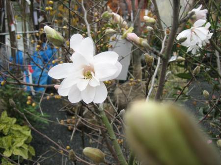 久留米植木祭り 097 - コピー