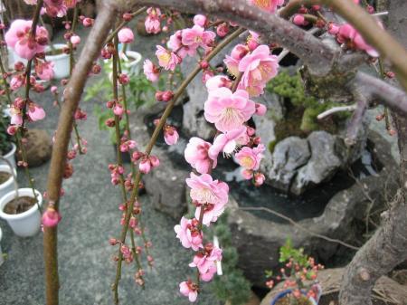 久留米植木祭り 114 - コピー
