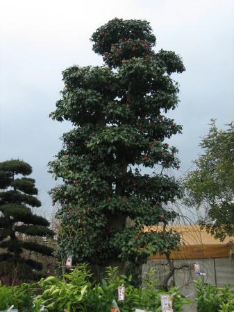 久留米植木祭り 134 - コピー