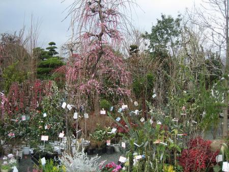 久留米植木祭り 144 - コピー