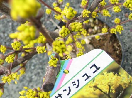 久留米植木祭り 012