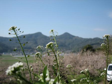 雷山、井原山 077 - コピー