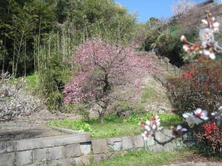 雷山、井原山 184 - コピー