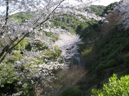 清水山の桜 020 - コピー