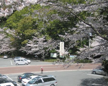 清水山の桜 092