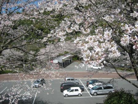 清水山の桜 090 - コピー