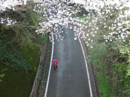 清水山の桜 041 - コピー