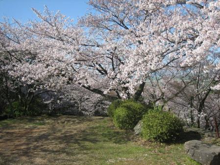 清水山の桜 033 - コピー