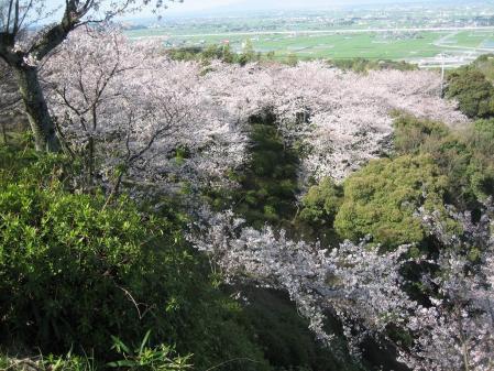 清水山の桜 037 - コピー