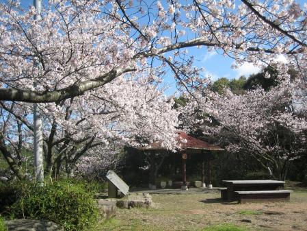清水山の桜 028 - コピー