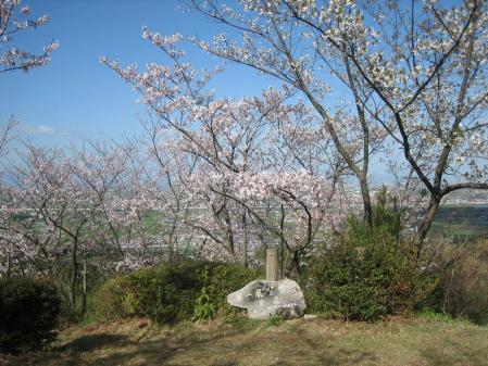 清水山の桜 014 - コピー