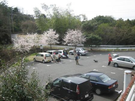 蛇が谷公園の花観 091 - コピー