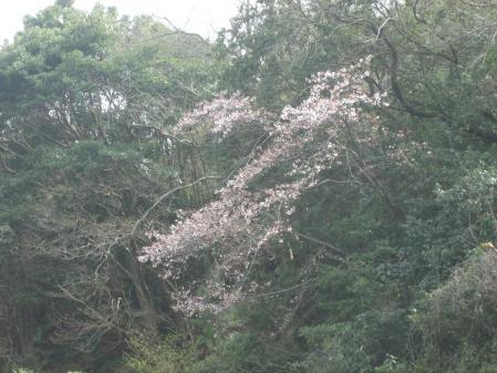 蛇が谷公園の花観 094 - コピー