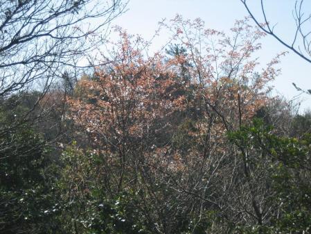 蛇が谷公園の花観 009 - コピー