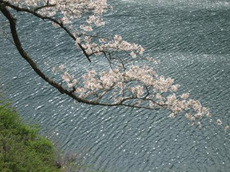 日向神の桜 114 - コピー