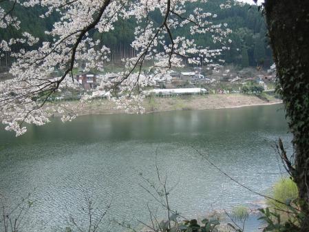 日向神の桜 038 - コピー