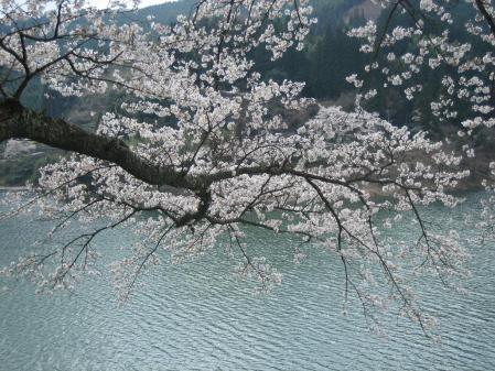 日向神の桜 080 - コピー