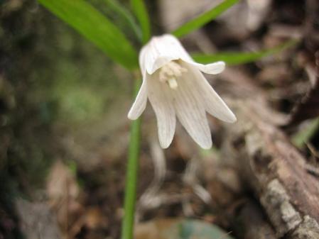 多良岳の花 そよ風さん 063 - コピー