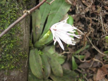多良岳の花 そよ風さん 067 - コピー