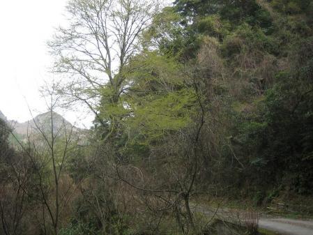 多良岳の花 そよ風さん 113 - コピー