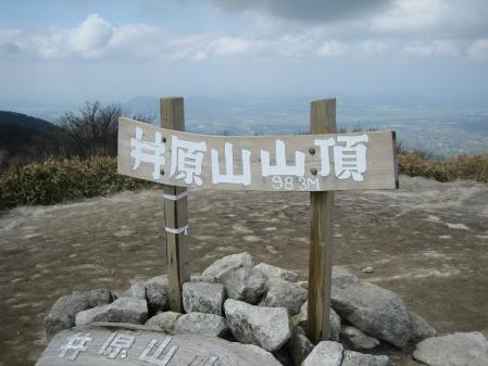花 井原山 237