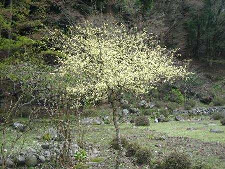 英彦山 047 - コピー