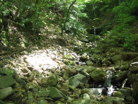 カラ迫山の花 092 - コピー