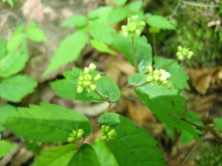 カラ迫山の花 111 - コピー