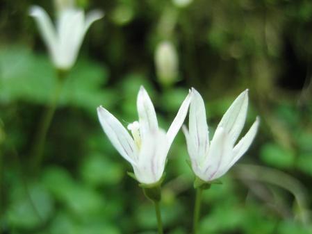 カラ迫山の花 096 - コピー