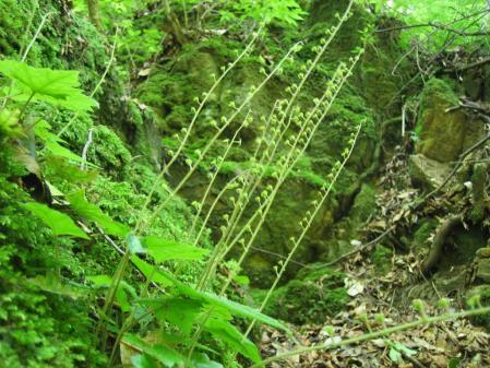 カラ迫山 142 - コピー