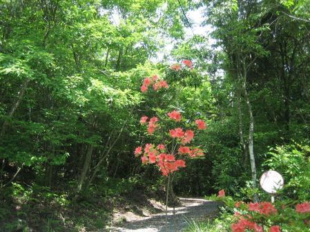 牛尾、小岱山の花 117