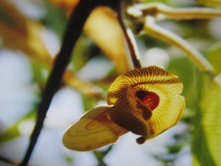 牛尾、小岱山の花 080