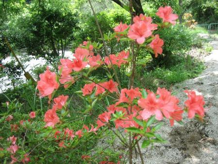 牛尾、小岱山の花 122