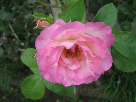 清水の野の花 010