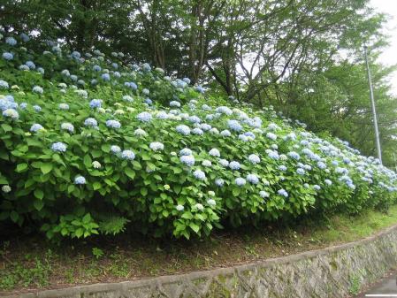 清水の野の花 030