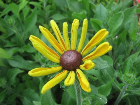清水の野の花 029