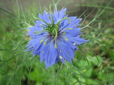 清水の野の花 022