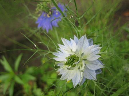 清水の野の花 023