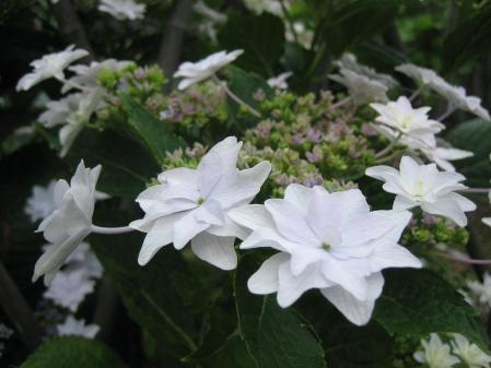 清水の野の花 014