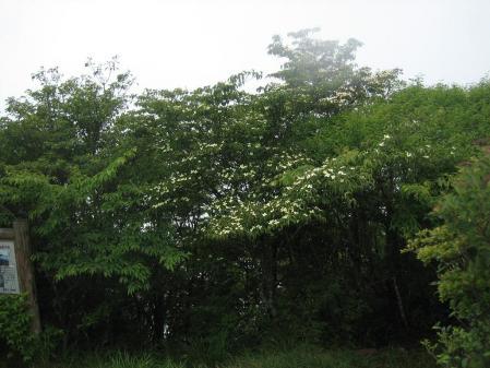 長崎九千部山 098 - コピー