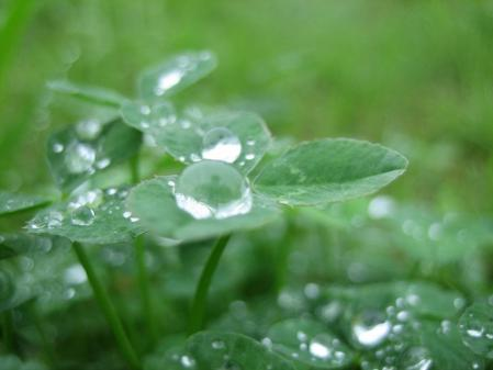 葉の梅の水玉と柳川 057