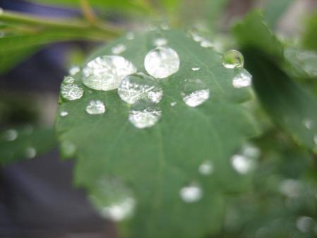 葉の梅の水玉と柳川 106