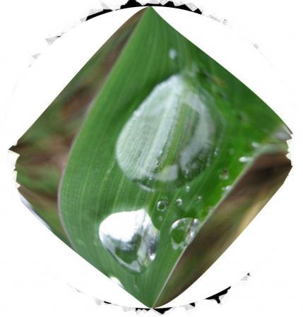 葉の梅の水玉と柳川 075